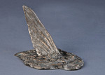 bonefish bronze fish sculpture